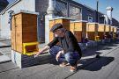 Bienenschwarm-Hoengg